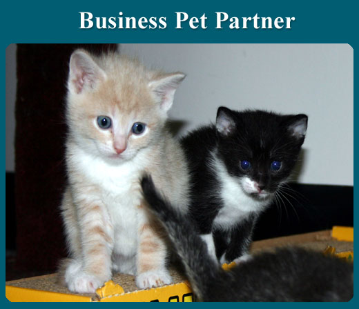 BusinessPetPartner