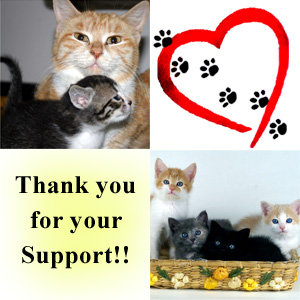 SupportCats